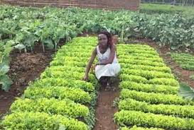 Kenya: Nakku Justine, A 25 Year Old Multi-Millionaire Farmer That Gets Things Done Herself