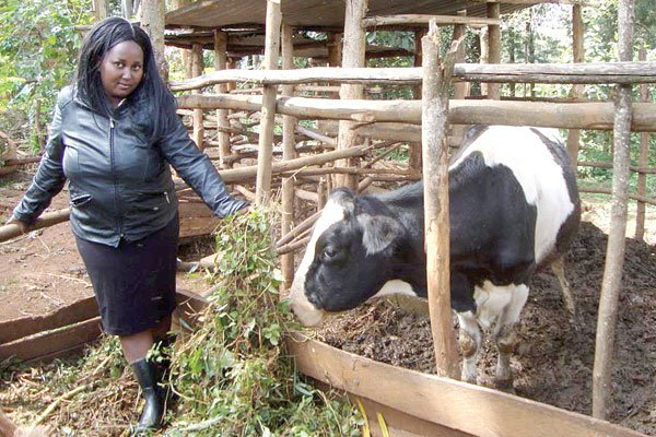 "Graduate:""I've opted to go into dairy farming than struggle to get employed"""