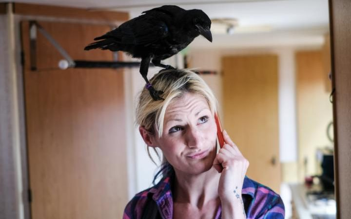 Woman rescued an orphaned crow – and now they are inseparable